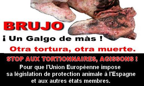 Pétition : Justice pour Brujo ! Stop aux tortionnaires d'animaux !