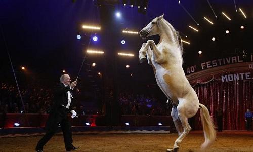 Non à la venue d'un cirque exploitant des animaux sur la commune de Loison-sous-Lens