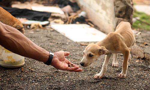 Pétition : Stop à la maltraitance animale dans les DOM TOM