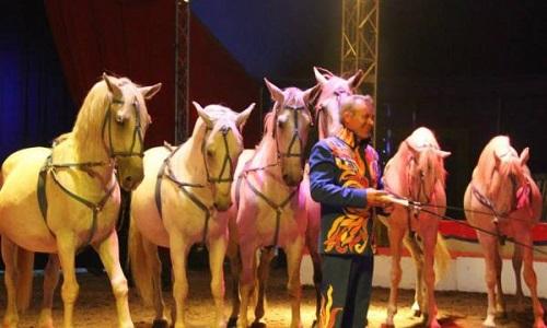 Caraving cirque du 18 au 26 Mars 2017 à Rennes