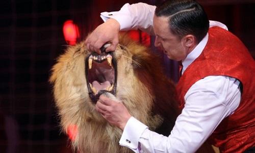 Non aux cirques avec des animaux esclaves