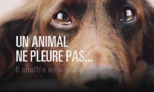 Maltraitance des animaux