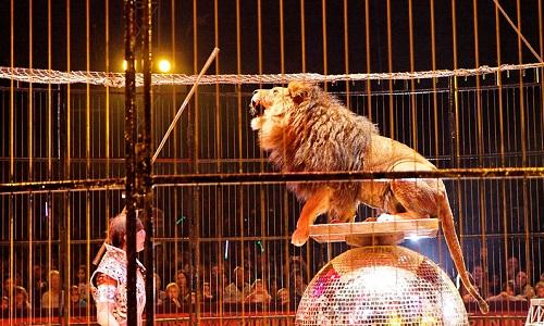 Le cirque Medrano à Vannes et Séné du 10 au 12 mars, n'a sa place nulle part tant qu'il utilisera des animaux sauvages tels que tigres, lions, éléphants et autres.
