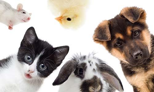 Protéger les animaux