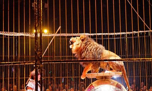 Roujan : Stop aux cirques avec animaux !