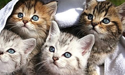 Stoppez la mesure préfectorale d'éradication des chats sur l'île de la réunion
