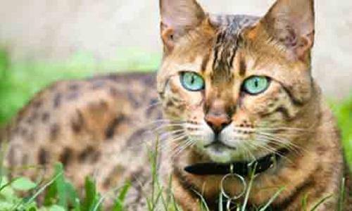 Chat assassiné par un voisin