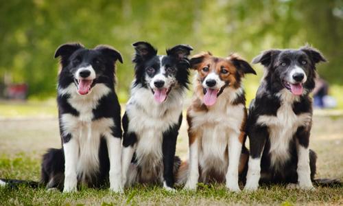Pétition : Aidons ces chiens !