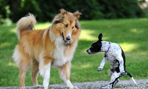 Pétition : Pour une saisie rapide des deux chiens sur le camp des gens du voyage