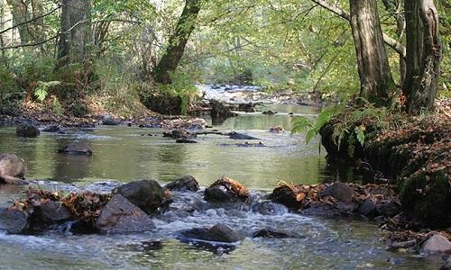Pétition : Non à la disparition des rus, des ruisseaux, des petites rivières de la carte des cours d'eau