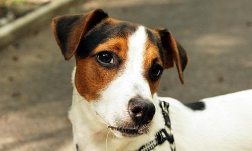 Honte : un chien appartenant à une jeune fille a été vendu !