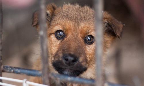 Demande d'interdiction de posséder un animal pour cause de maltraitance