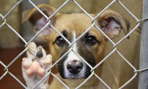 Pétition : Sauvons deux pauvres chiens innocents de l'euthanasie!