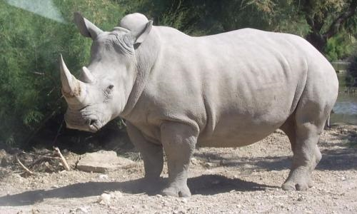 Pétition : Rhinocéros tué dans les Yvelines ! Stoppons le braconnage !