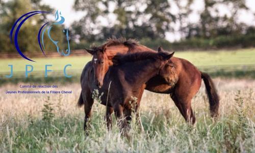 Pétition : Suspension du projet live betting (prise de paris sportifs en direct) dans les points de vente de la FDJ afin de sauver la filière cheval