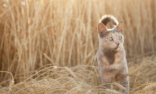 Soutenons les démarches d'éradication des chats errants sur le territoire français pour la protection de notre microfaune !