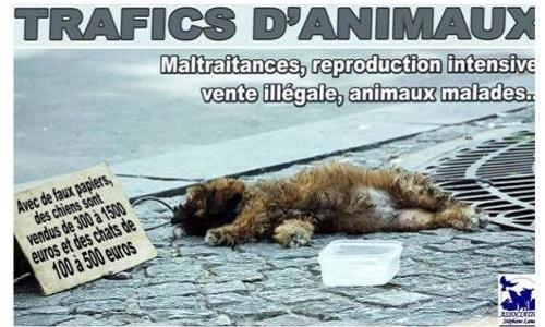 Non aux trafiquants d'animaux !