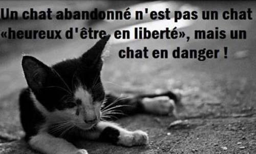 Pour une campagne de stérilisation des chats à Echenoz-la-Méline (70000)