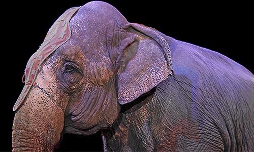 Pétition : Non aux cirques avec animaux, à leur exploitation et à leurs souffrances !