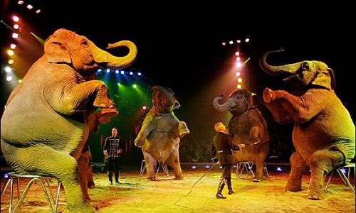 Faites interdire les cirques avec animaux