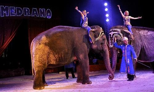 Pour l'annulation de l'autorisation d'installation du Cirque Medrano sur notre commune, Perpignan