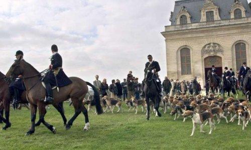 Pétition : Non au retour de la chasse présidentielle M. Macron