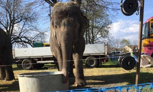 Stop aux animaux maltraités dans les cirques