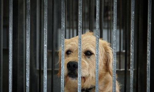 Pétition : Demande de conditions de vie descentes pour les animaux à la SPA de Mouscron