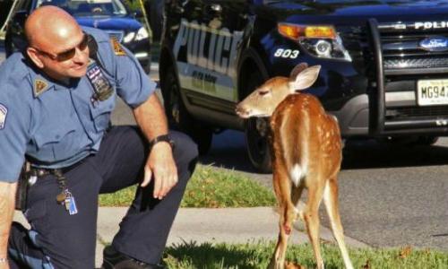 Pour la création en Belgique d'une brigade de police attachée à la protection animale et la mise en place d'une autorité faisant respecter les droits des animaux