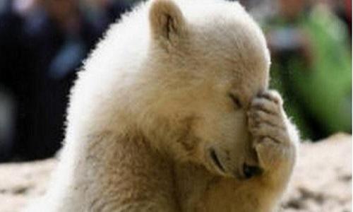 Pétition : Tous contre la remise en liberté de la chasse aux ours, loups et leurs progénitures en Alaska contre Donald Trump