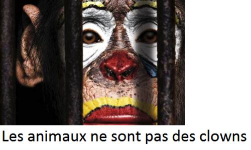 Pas d'animaux dans les cirques à Saint-Dié-des-Vosges