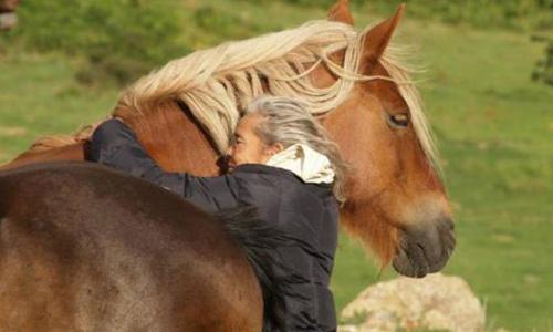 Pour sauver l'un des derniers troupeaux de chevaux semi-sauvages de France !