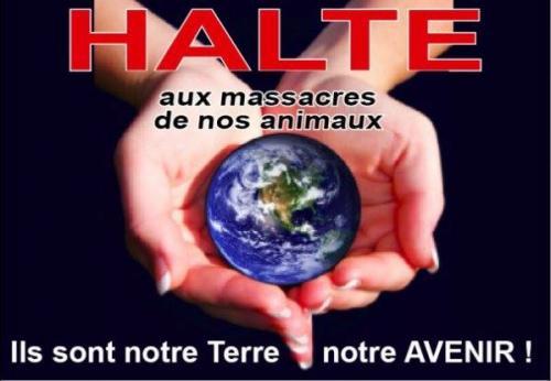 HALTE AUX MASSACRES