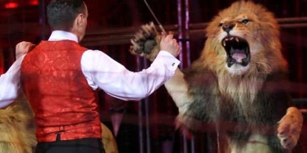 Pétition : Non à l'euthanasie du lion qui s'est rebellé blessant son dompteur, dans un cirque
