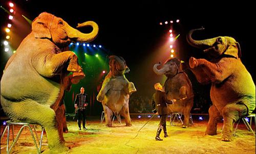 Pétition : Pour le maintien des animaux dans les cirques