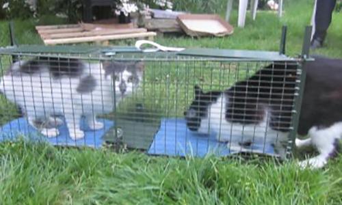 Contre le piégeage illégal des chats