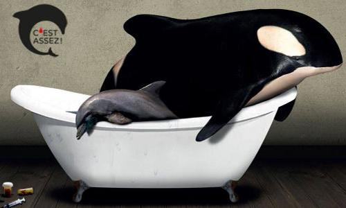 Pétition : Non à la mise en danger de l'arrêté sur les delphinariums !