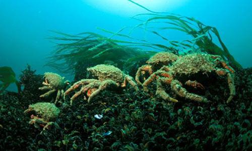 Relâchons les crustacés en milieu naturel !