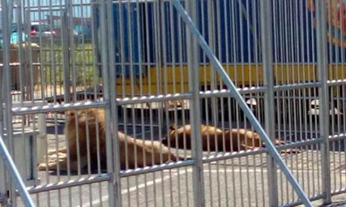 Oui aux cirques sans animaux à Annecy !
