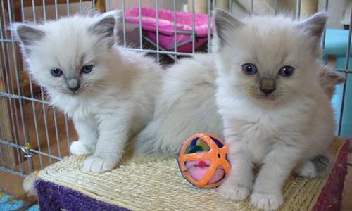 Interdire les particuliers de donner des chatons sans passer par une association pour un contrat de suivi et de mise en règle.