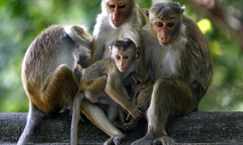 Nous réclamons une enquête indépendante en faveur des 150 primates euthanasiés arbitrairement !