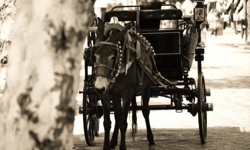 Contre la souffrance des chevaux de Bruges !