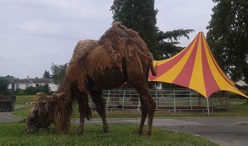 Pour l'interdiction de cirque avec animaux dans l'Essonne et sur l'ensemble du territoire