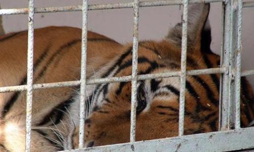 Stop au cirque avec animaux sauvages !
