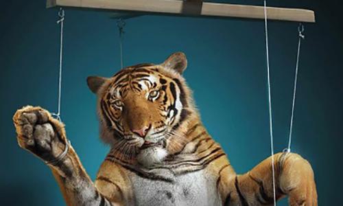 Non au cirque avec animaux Melvin sur la commune d'Epinay Sur Orge !