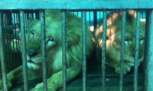 Pour l'interdiction des cirques avec animaux à Honfleur
