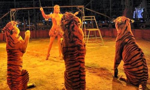 Pétition : Le cirque classique et traditionnel, c'est AVEC des animaux