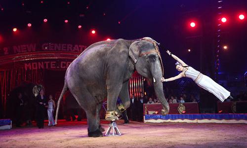 Pour l'interdiction des cirques avec animaux sur la commune de Saint Maximin St Baume