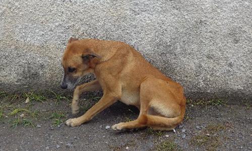 Pour que justice soit faite contre les personnes qui ont maltraité leur chien !