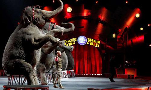 Pour des cirques sans animaux